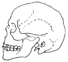 جمجمه انسان - آموزشگاه نقاشی