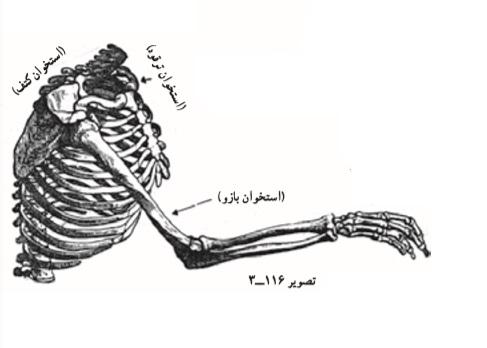 طراحی دست _ آموزشگاه نقاشی شرق تهران