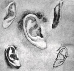 طراحی اجزای صورت _ طراحی گوش